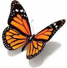 farfalla-e1547335968617.jpg